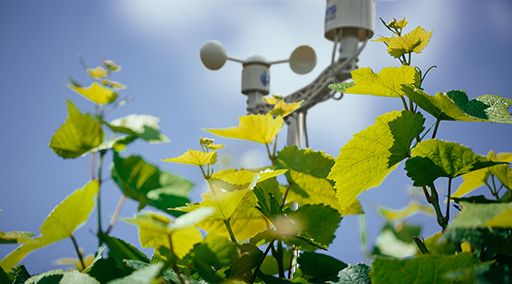 IoT weather station in the vineyard