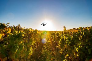 Drones in Vineyards